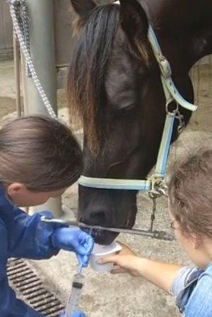 Horse Event 2018. Mobiel droesdragers screenen en luchtzakken schoonspoelen